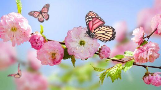 Nisan Burç Yorumları